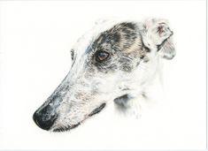 Galgo español, Greyhound, Ilustración, Lápiz, Pencil, Crayon, Grafito, Caran d'Ache. Dog portrait Color Pencil Art, Colored Pencils, Goats, Husky, Puppies, History, Cool Stuff, Greyhounds, Friends