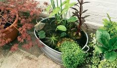 Gardening With Containers Small garden with a mini wildlife pond in a bucket. - Create an attractive mini-pond, perfect for small gardens or balconies, using our easy practical guide, from the experts at BBC Gardeners' World Magazine. Ponds For Small Gardens, Small Ponds, Small Water Features, Water Features In The Garden, Container Water Gardens, Container Gardening, Diy Container Pond, Water Containers, Mini Pond