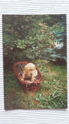 Mój pierwszy pies z dzieciństwa. 😊