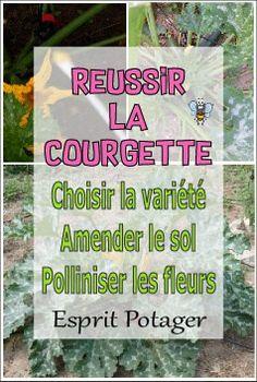Réussir la courgette :  choix de variété, amendement et pollinisation. Permaculture, Legume Bio, Biologique, Coups, Diy, Inspiration, Gardens, Zucchini Flowers, Planting Flowers