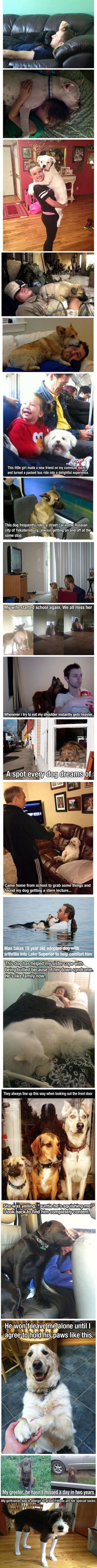 Proof that Dogs are awesome