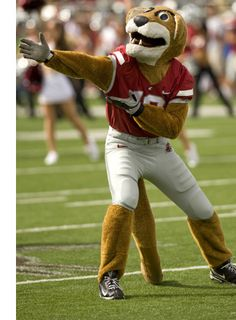 Butch T. Cougar, mascot for the Washington State Cougars.