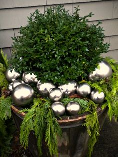 Boxwood holiday container with weeping cedar and silver Christmas ornaments