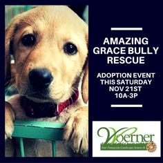 Amazing Grace Bully Rescue will be holding a #pet #adoption #event at #Woerner #Landscape #Source & #Pet Supply #Saturday #November 21st from 10a-3p! #Pensacola