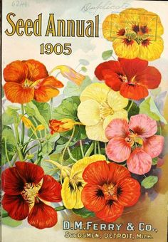 Cover of Seed Annual 1905. D,M, Ferry & Co. Seedsmen, Detroit, Mich.