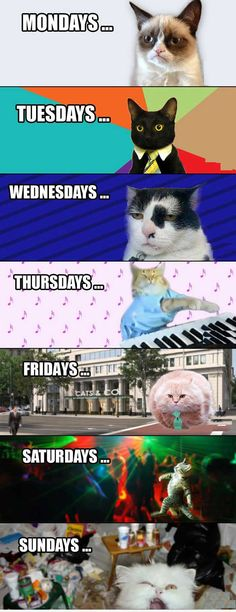Cat's Week in Timeline, works for me too! Only im grumpy cat mon-thursday.
