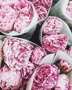Bom dia com as flores preferidas da blogueira @sincerelyjules: as peônias! Quais são as suas? #regram  via ELLE BRASIL MAGAZINE OFFICIAL INSTAGRAM - Fashion Campaigns  Haute Couture  Advertising  Editorial Photography  Magazine Cover Designs  Supermodels  Runway Models