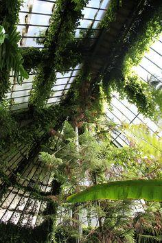 Botanical Gardens - Real Jardín Botánico de Madrid