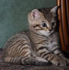 Tabby Kittens, Animals, Facebook, Kittens, Cats, Animales, Animaux, Animal, Animais