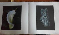 Livre photographique de Dominique Laugé, accompagné d'un poème de Maya de Chanterac. L'artiste a photographié les réserves des musées d'histoire naturelle de Gaillac, d'Alexandrie et de Turin. Dominique, Turin, Maya, Natural History Museum, Alexandria, Artist, Maya Civilization