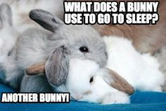 Best cuddle buddy even for bunnies is bunnies! #bunny #bunnies #rabbit #cuteanimals #pets