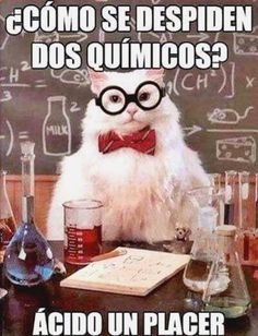 The Absolute Best Of Chemistry Cat - I Can Has Cheezburger? humor The Absolute Best Of Chemistry Cat Cat Jokes, Funny Animal Memes, Stupid Funny Memes, Funny Puns, Funny Animals, Funny Captions, Funny Humor, Chemistry Cat, Chemistry Tattoo