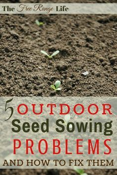 Raising up a healthy seed and seedling into a productive plant takes some work. Learn these common outdoor seed sowing problems and how to fix them!