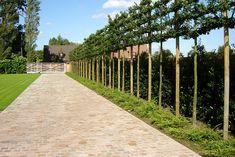 tuinaanleg oprit leiboom Dream Garden, Home And Garden, Stone Driveway, Irish Landscape, Belgian Style, Gate Design, Terrace Garden, Pavement, Garden Inspiration