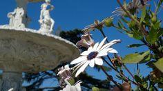 Fuente y flor en Chivilcoy, Buenos Aires