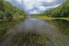 Alexander Springs | Alexander Springs Creek, Ocala National Forest, Lake County, Florida 3 ...