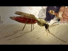 What do Jesuit priests, gin and tonics, and ancient Chinese scrolls have in common? They all show up in our animated history of malaria. It's a story of geop...