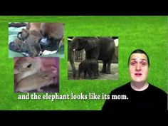 Living and Nonliving Things youtube for ESL students 6 min