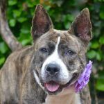 BEANY – A1064615. BACK ON LIST TBD 05/23/16
