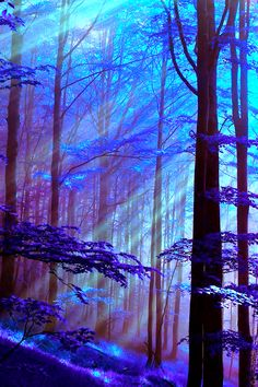 Fleeting beams into spring forest - Bulgaria  (photoshopped with purple color)