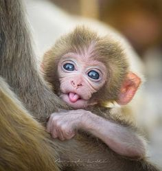 Look I'm going to put this as gently as possible.if you have kids the odds are good that one of them is going to end up in prison.it's practically science. Baby Animals Pictures, Funny Animal Pictures, Animals And Pets, Wild Animals, Cute Baby Monkey, Pet Monkey, Cute Little Animals, Cute Funny Animals, Primates