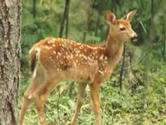 Photo from North West Trek The photo to the left is of a beautiful young fawn. A beautiful young Whitetail fawn. Just the fact that the deer. Vivaldi Four Seasons Spring, Vivaldi Spring, Kids Class, Life Cycles, Learn To Read, Baby Animals, Giraffe, Deer, My Favorite Things