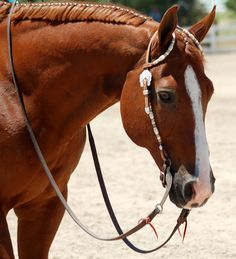 banded mane and show headstall.. how my horse will look this summer :)