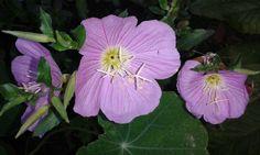Predivan bastenski cvet.