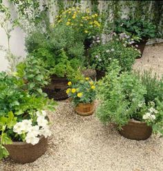 Harvesting Herbs from Your Garden Making the most of your gardens bounty.