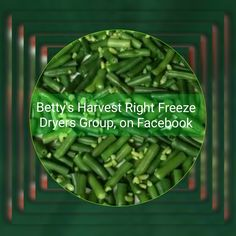 Prepping green beans for freeze drying in a Harvest Right freeze dryer.