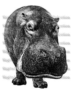 Hippopotamus Digital Download. Image Number 0187. NEW: DOWNLOAD DIRECTLY FROM ETSY IMMEDIATELY FOLLOWING PURCHASE! Digital wildlife engraving of a hippopotamus in profile. This stately hippopotamus is great for the hippo lover, zoo wildlife lover, or animal lover in general! Wildlife hippopotamus digital picture. This digital image is 8.5 x 11 inch high resolution 300 DPI (300 PPI) for print at home on any inkjet or laser printer. Your purchased image file will be clean and not include…
