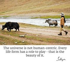 Life Form, Daily Quotes, Universe, Animals, Play, Beauty, Instagram, Daily Qoutes, Animais