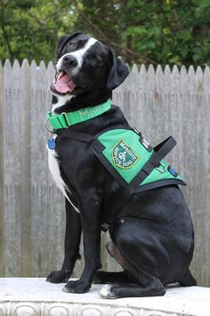 Therapy / Service Dog S style Dog Vest by TheGoodieShack on Etsy, $24.99