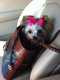 My Yorkie, Elle. Isn't she adorable ?! This day she went shopping with me. We went to my favorite store here in town. She stayed in the bag in the dressing room while I tried on clothes. (And I tried on a lot!) She's a good shopper!