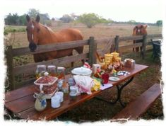 FAKE farm life. You would never set up a picnic this close to livestock....there would be flys, smells, and worse!