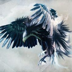 eagles - Google Search