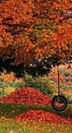 beautiful fall tree with a tire swing....