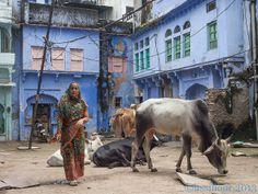 Rues de BUNDI Streets .....INDIA | Flickr - Photo Sharing!