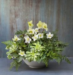 The Plant Recipe Book: living arrangements. Hellebores, Succulents and Ferns.
