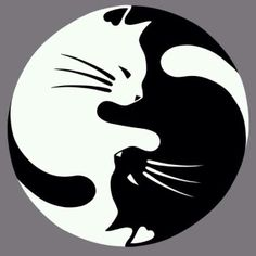 Yin Yang lucky cat tattoo - this would be nice with a watercolor wash instead of black CAT AND DOG YING YANG Yin Yang Tattoos, Ying Yang, Yin And Yang, Yin Yang Art, Lucky Cat Tattoo, Tattoo Cat, Cat Tattoos, Ankle Tattoos, Tiny Tattoo