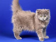 """Adorable fluffy cat ❤️ #cat #cats #catsagram #catstagram #instagood #kitten #kitty #kittens #pet #pets #animal #animals #petstagram #petsagram…"""