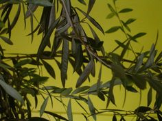 Aceite de Oliva a las finas hierbas