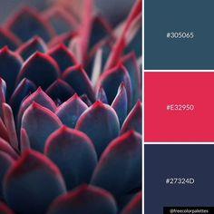 ideas for succulent art drawing colour Scheme Color, Red Colour Palette, Paint Color Schemes, Color Combos, Blue Palette, Color Balance, Colour Board, Color Swatches, Color Theory