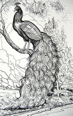 "9"" X 12"" Pen and Ink Drawing on Smooth Strathmore Bristol of two Peacocks getting refreshed in a fountain."