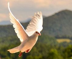 That the Holy Ghost is the third member of the Godhead and that he often appears accompanied by the sign of the dove.