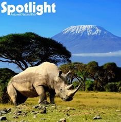 Amboseli National Park in Kenya offers some of the best wildlife viewing in the world. There are more than 400 species of birds, free-ranging elephants, cape buffalo, lion, rhino, cheetah, giraffe and zebra to see within the park. Not to mention the awe-inspiring views of Mount Kilimanjaro
