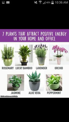 Home Gym – 7 Plants that attract positive energy in your home and office – amzn…. Home Gym – 7 Plants that attract positive energy in your home and office – Meditation Corner, Meditation Rooms, Mindfulness Meditation, Garden Plants, Indoor Plants, Jasmine Plant Indoor, Zen Room, Decoration Plante, Inside Plants