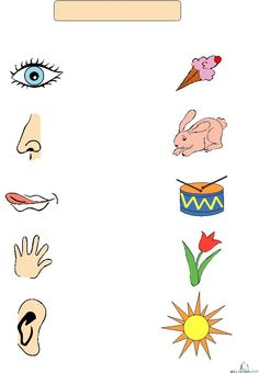 Five Senses Match-Up This website offers 10 free printable pages a month for all school ages. A great resource for teachers.This website offers 10 free printable pages a month for all school ages. A great resource for teachers. Five Senses Preschool, 5 Senses Activities, My Five Senses, Body Preschool, Kindergarten Science, Preschool Themes, Preschool Learning, Kindergarten Worksheets, Worksheets For Kids