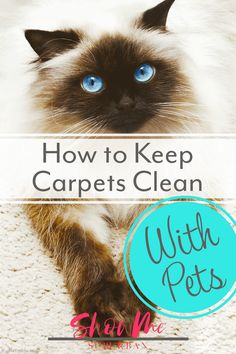 I started doing these 4 things and was amazed at how clean my carpets looked, even with my 2 cats! Great tips on how to keep carpets clean with pets, especially if you have dogs or cats. Awesome tips, ideas, and recommended carpet cleaning products! Daily Cleaning Checklist, Weekly Cleaning, Cleaning Hacks, Cleaning Schedules, Pet Odors, Homekeeping, Diy Cleaning Products, Diy Stuffed Animals, How To Clean Carpet