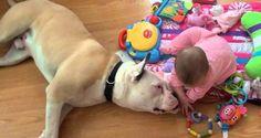 El cariñosísimo bulldog americano que murió de cáncer y su amor incontenible por una bebita